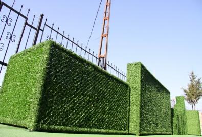 Применение вертикальных ландшафтных растений